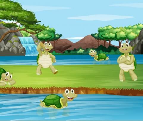 Félix, la tortuga valiente