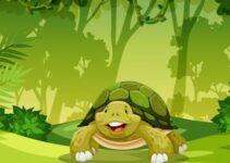 La casa de la señora tortuga